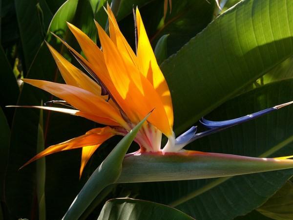 Flores Cuernavaca