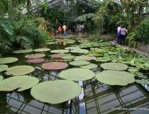 El Jardín Botánico en la ciudad de Bonn
