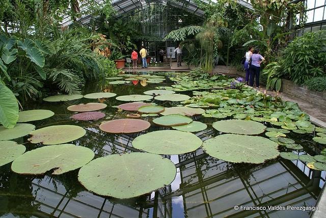 El jard n bot nico en la ciudad de bonn for Jardin botanico en sevilla