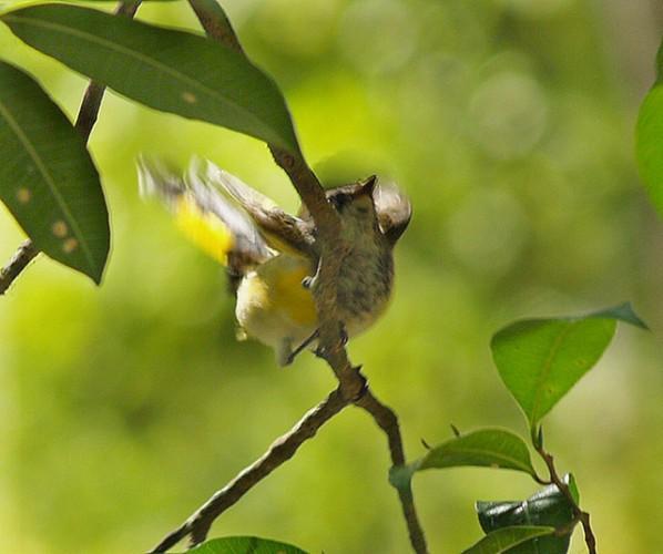 Parque Calakmul