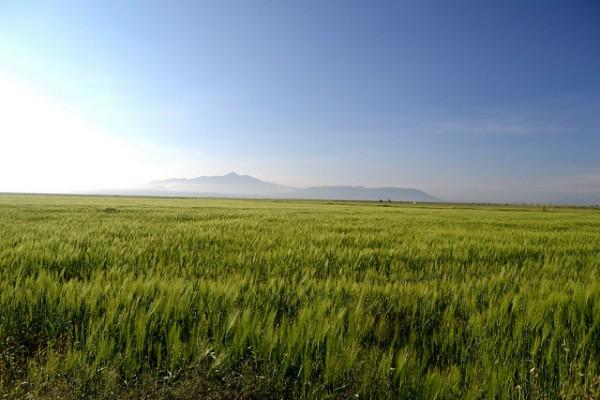 Imagen de sus campos