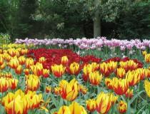 Visita los jardines Keukenhof, solamente en primavera