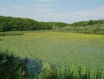 El Parque Nacional de Biesbosch