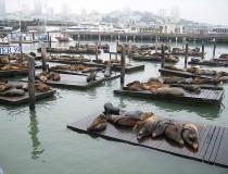 Pier 39, todo un atractivo turístico de San Francisco
