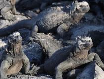 Islas Galápagos, las islas encantadas