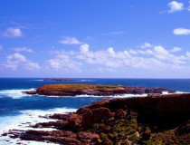 Isla Canguro, hogar de mamíferos