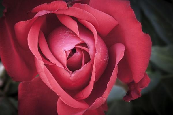Leyenda de la 'Rosa del Inca'