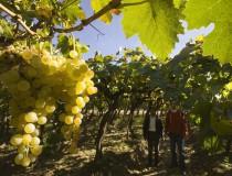 Vinos riojanos