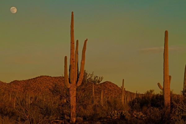Parque Nacional Saguaro, el símbolo universal del Lejano Oeste