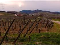 Ruta de los Vinos de Alsacia