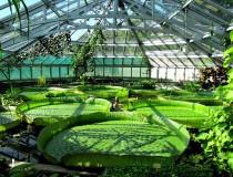 Los invernaderos de Gruson, jardín botánico en la ciudad de Magdeburgo