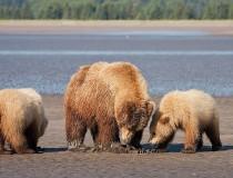 Parque nacional y reserva Katmai, en Alaska