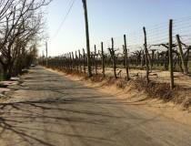 Guaymallén, un paraíso en Mendoza