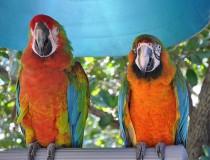 Jungle Island, la selva tropical de la ciudad de Miami
