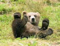 La isla de Kodiak, en compañía de osos pardos