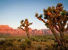 El Parque Nacional Joshua Tre, un atractivo lugar al sur de California