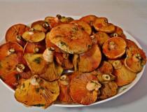 Robellones, el manjar de Teruel que llega en otoño