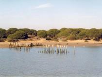 El Parque Nacional de Doñana, un tesoro natural en el Sur de España