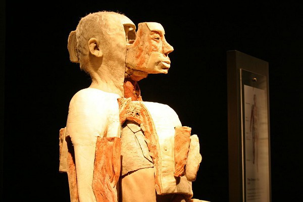 La polémica exposición Bodyworlds se instalará permanentemente en Berlín