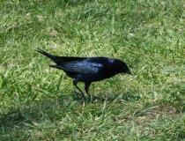 Avistamiento de aves en plena ciudad de Buenos Aires