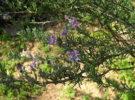Disfrutar del Jardín Botánico de Niza