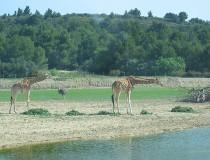 Parque zoológico del Mediterráneo: reserva africana de Sigean