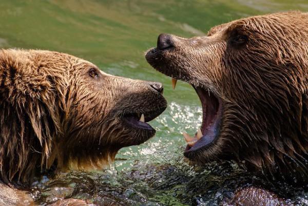 Bärengraben, el parque de los osos de Berna