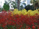Información para visitar el Real Jardín Botánico de Sidney