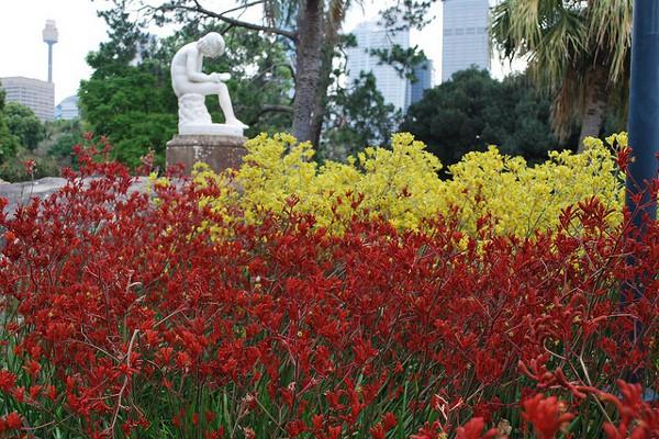 Flores en el Real Jardín Botánico de Sidney
