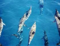 Delfinario en Bahía Naranjo