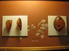 Museo del Ámbar de Santo Domingo