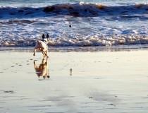 Descubre las playas que permiten perros en Cataluña y la Comunidad Valenciana