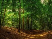 Bosque Fladbro en Randers