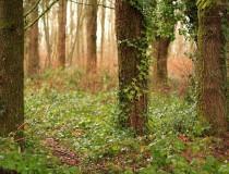 Alderwood Park en Surrey