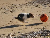 Descubre las playas que permiten perros en Galicia