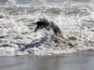 Descubre las playas que permiten perros en Mallorca
