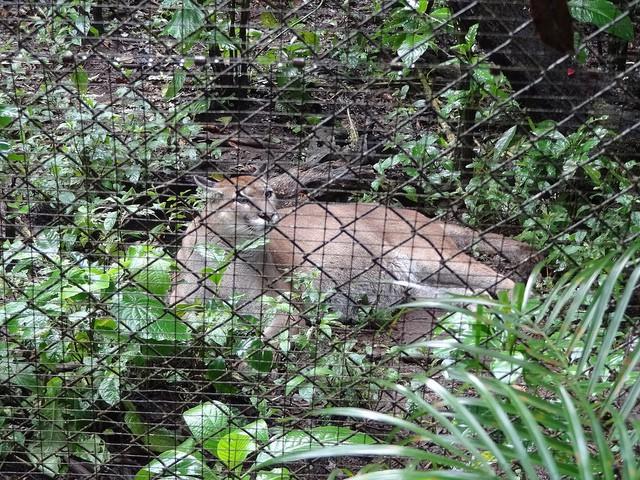 Parque de Conservación de Vida Silvestre Zoo Ave en Alajuela
