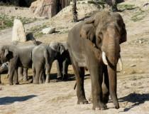 Terra Natura, un zoológico respetuoso en Benidorm
