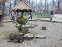 Zoológico de Miskolc
