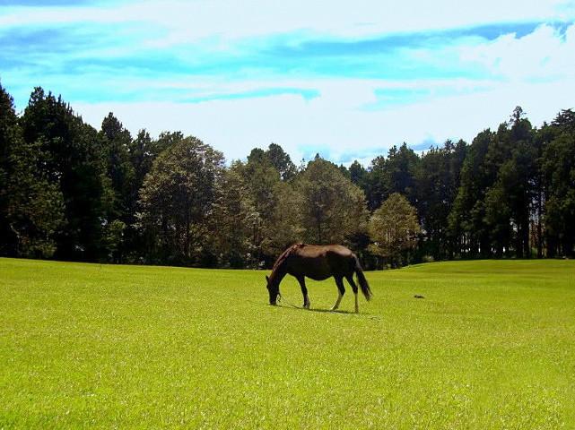 Bosque de la Hoja en Heredia