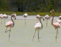 Parque Nacional Jaragua en República Dominicana