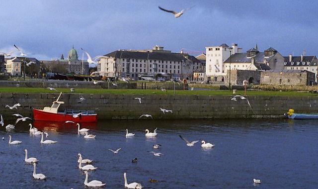 Jardín el Círculo de la Vida de Galway