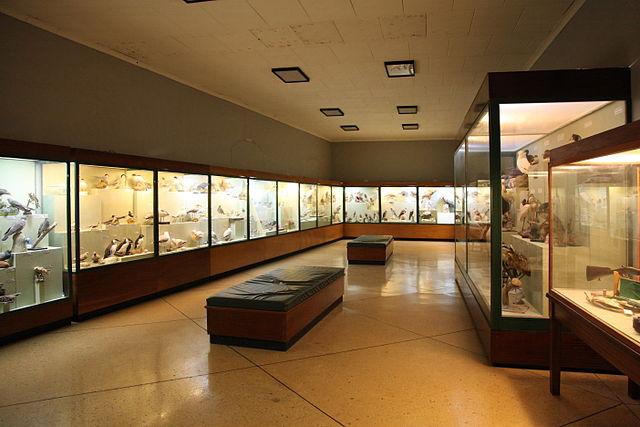 Museo de Historia Natural de Malta