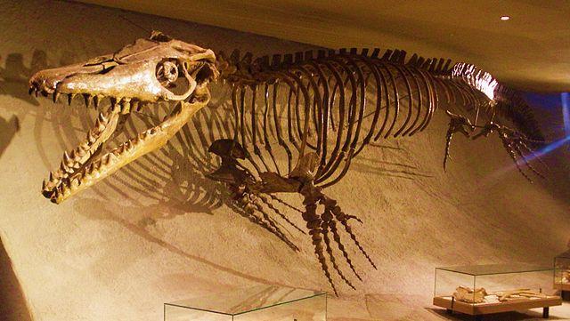 Museo de Historia Natural de Maastricht
