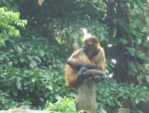 Santuario de Sibu, refugio de vida silvestre