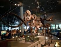 Museo Naturalis en Leiden