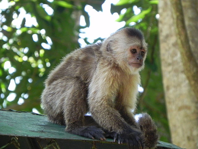 Parque Zoológico Löfling en Ciudad de Guyana