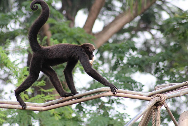 Zoológico El Pantanal en Guayaquil