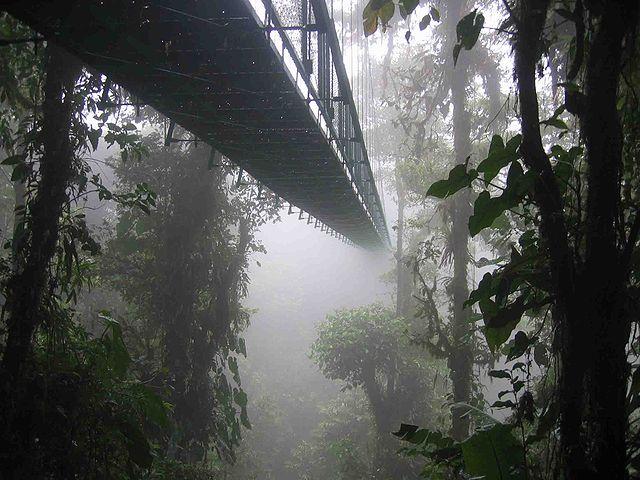Paseo en teleférico del bosque Lluvioso