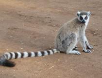 Zoológico de Gyor en Hungría